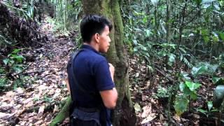 Calling Birds | La Selva Amazon Ecolodge & Spa | Ecuadorian Amazon