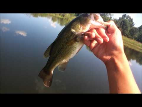 RCF: Pond Fishing Ep.7: Decent Bass