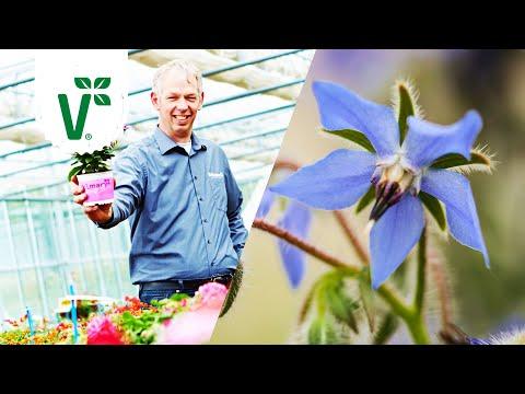 Welche Blüten sind essbar? (Essbare Blumen) - Volkers Gartenwissen