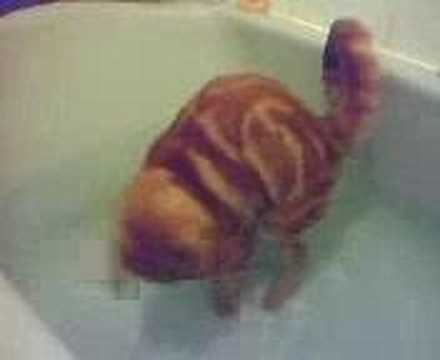 0 Kitty taking a bath