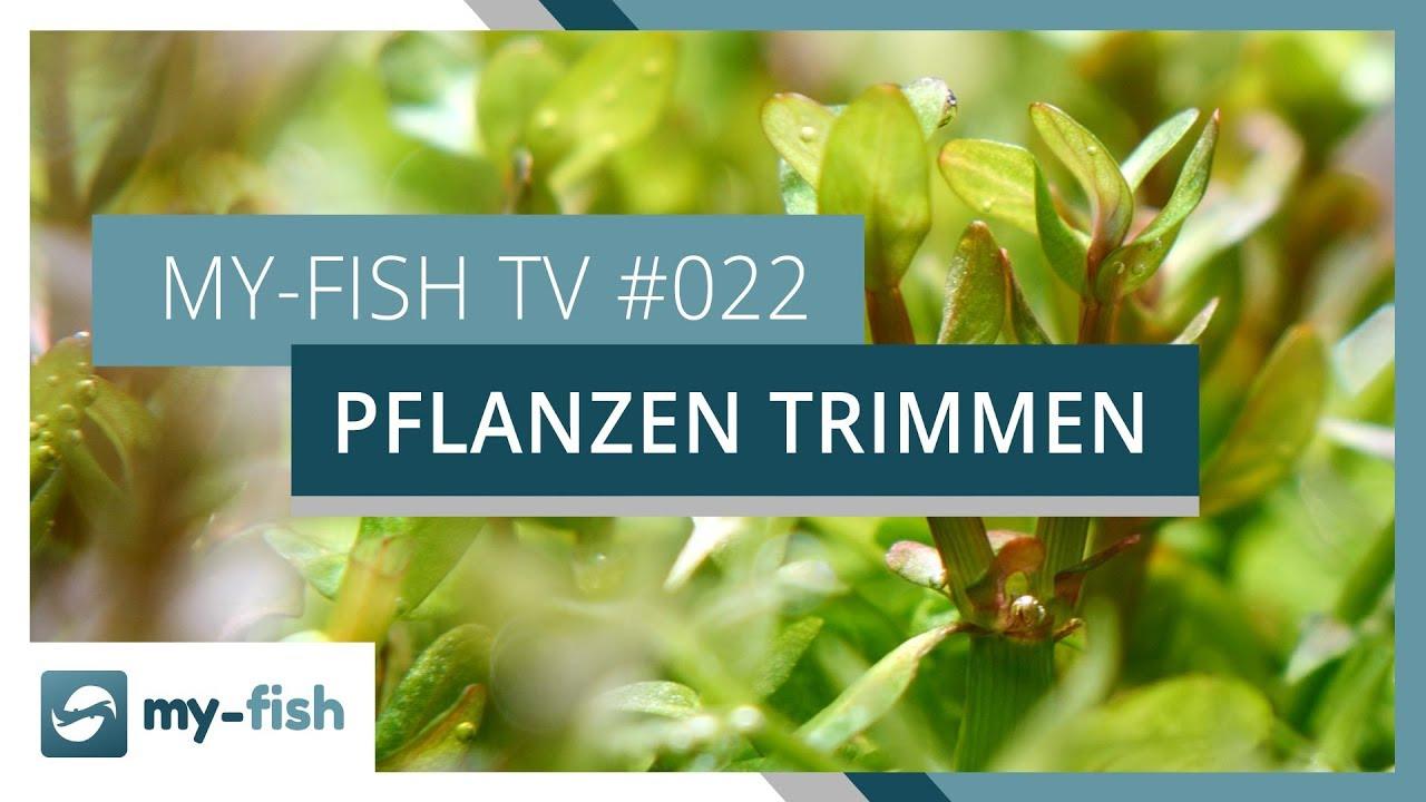 my-fish TV - Deine Nr. 1 Anlaufstelle für alle Themen rund um die Aquaristik 42