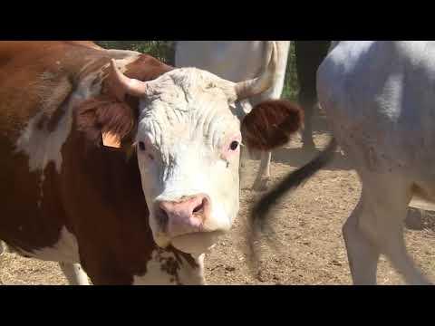 """Sequestro allevamento di bestiame, l'azienda: """"siamo rimasti scioccati"""""""