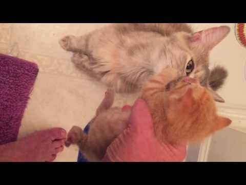 gatta-dal-cuore-spezzato-trova-la-felicita-adottando-un-gattino-orfano