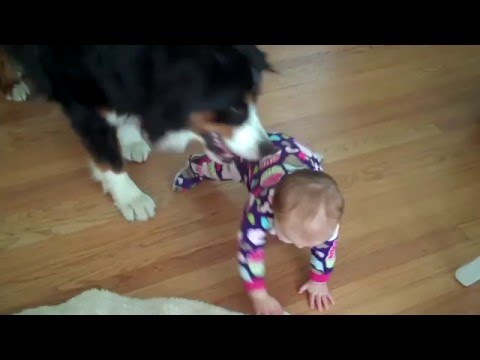 Dog Is A Jerk To A Baby