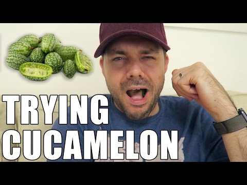 Trying Cucamelom | #TOD VLOG