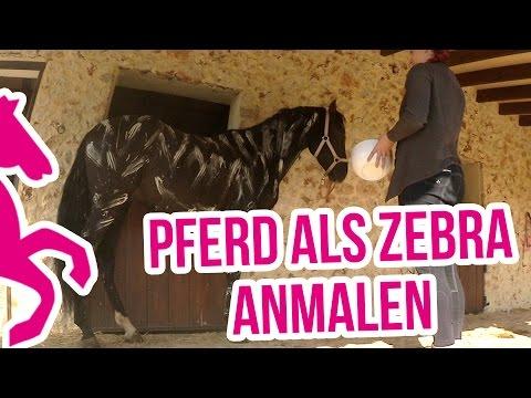 Pferd als Zebra anmalen - Fliegenschutz - Fail