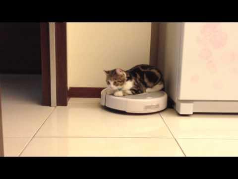 超萌貓咪親自示範《吸塵器搭乘教學》~保證一看就會!