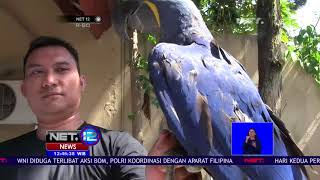 Video Ini Dia Burung Macaw Yang Ditaksir Mencapai Ratusan Juta Rupiah-NET12 MP3, 3GP, MP4, WEBM, AVI, FLV Februari 2019