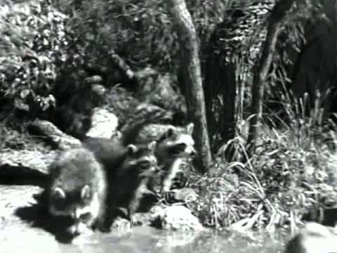 Белый Клык (1946) - DomaVideo.Ru