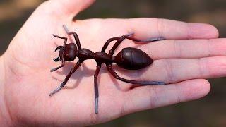 GIGANTIC ANT!