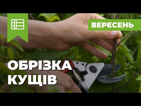 Как правильно обрезать крыжовник