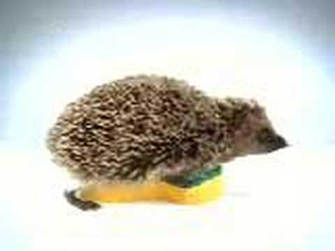 """Best tv ad - Spontex sponge """"hedgehog"""""""