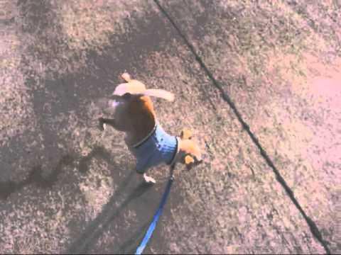 2 Legged Walking Dog Pee Champion