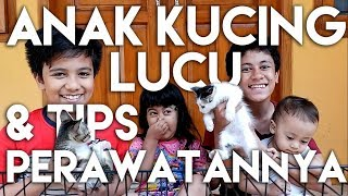 Video Tips Merawat & Membersihkan Anak Kucing & Kandangnya I Kids Brother MP3, 3GP, MP4, WEBM, AVI, FLV Januari 2019
