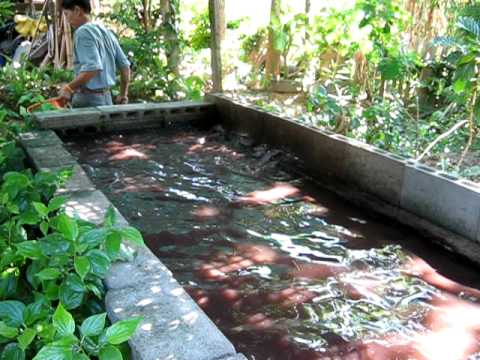Aqua tanks topic aquaponics fish farm kerala for Aquaponics fish food