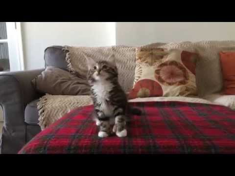 This Funky Kitten Is All Of Us When She Hears Uptown Funk