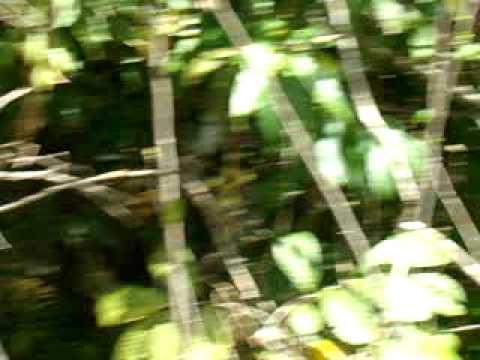 Cachoeira do Lageado Alto Garças 4