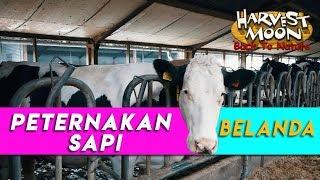 Video CANGGIH! BEGINILAH PROSES PEMERAHAN SUSU SAPI DI BELANDA! | PETERNAKAN SAPI PART 1 | REZZVLOG MP3, 3GP, MP4, WEBM, AVI, FLV September 2018