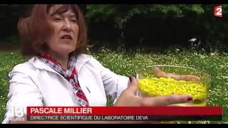 Le pouvoir des fleurs le journal de 13 h sur France 2 8 nov. 2016