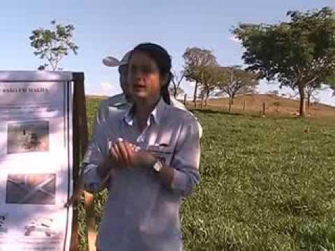 Apresentação Carina Gonçalves - Sistema de Irrigação de Pastagem por Asperção em Malha