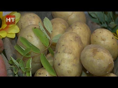 В Новгородском районе проходит семинар по современным технологиям выращивания картофеля