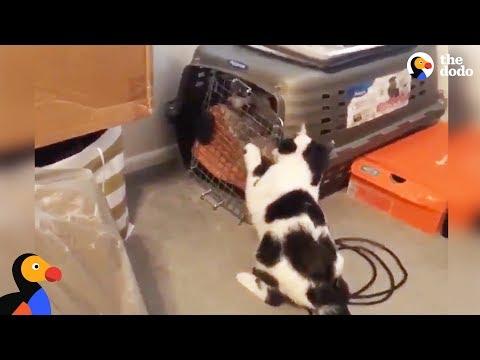 il-gatto-che-libera-i-cagnolini