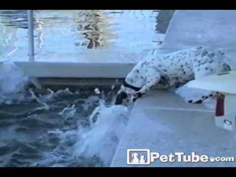 Hot Tub Hound Dog- PetTube