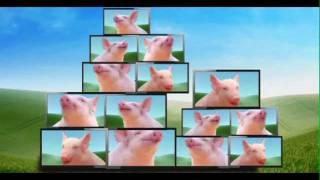 """Video Early Wean """"Oink"""" TVC MP3, 3GP, MP4, WEBM, AVI, FLV Juli 2018"""
