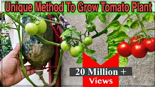 Video Best Method To Grow Tomato Plant in Plastic Hanging Bottle ll Vertical Gardening ll No Space Garden MP3, 3GP, MP4, WEBM, AVI, FLV Juni 2019