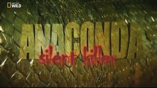 sessiz katil  anakonda belgesel