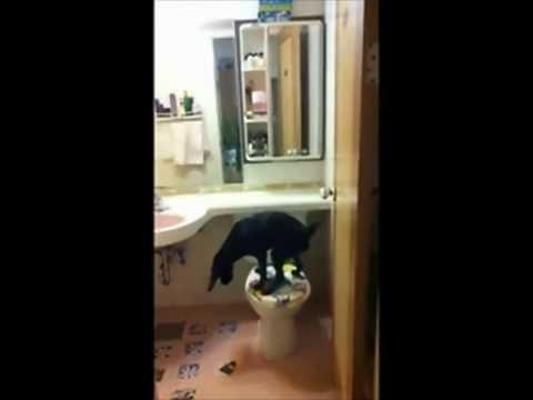 Speel Hond gaat naar wc af