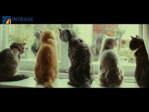 Năng lực ninja tiềm tàng... Lũ mèo đang dần thống trị trái đất