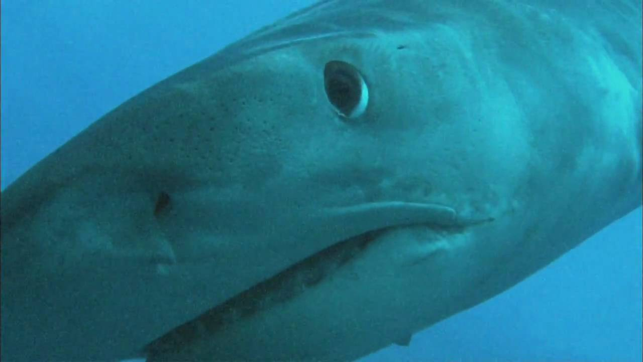 Pozor, žraloci!