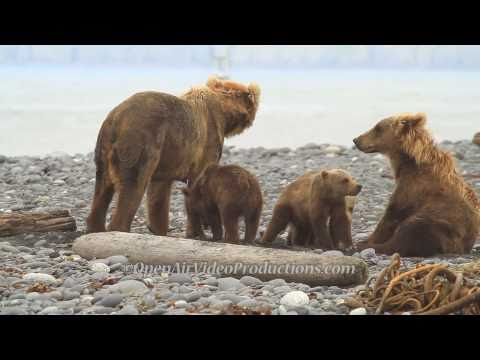 Alaska's Great Kodiak Bears - Ayakulik Adventures : salmon fishing on the ayakulik river, kodiak
