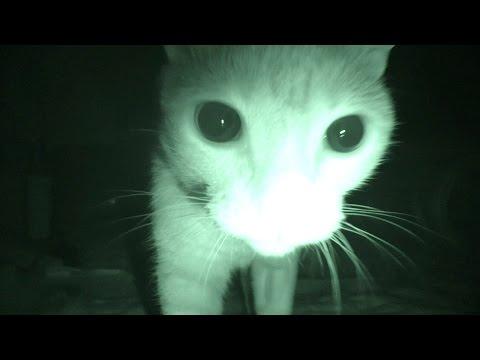 偷裝攝影機想知道貓咪半夜不睡都在幹嘛,結果竟拍到許多出乎意料的實錄…