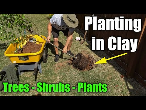 Planting in Clay Soil - Trees Shrubs and Plants
