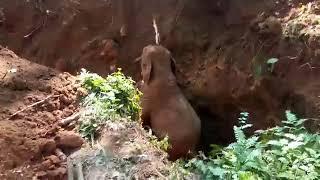 Słonie dziękują ludziom za uratowanie słonika