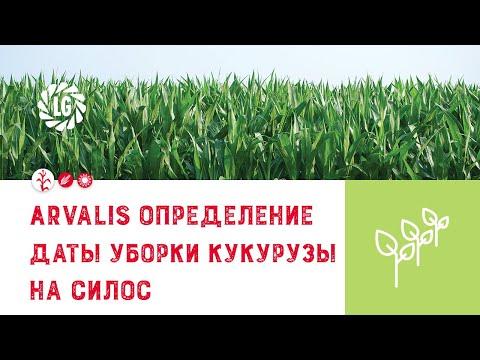 ARVALIS определение даты уборки кукурузы на силос - визуальные признаки