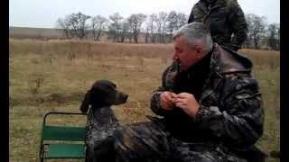Rosjanie pokazują, dlaczego psy są najlepszym przyjacielem człowieka