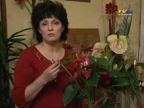 Porady florystki (2)