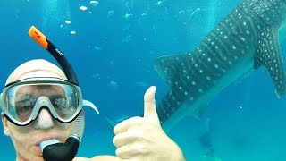 Oslob Philippines  city images : Philippines Expat:Off to Oslob, Philippines to See the Whale Sharks!