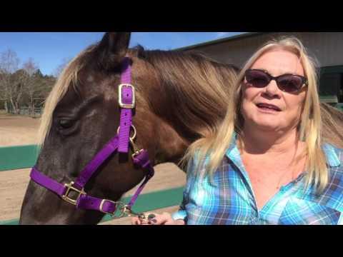 Horseback Riding at the Beach with Karen Arnett