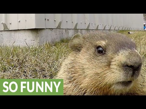 Check out this curious gopher & a Go-Pro!