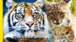 Nature via Nurture: Instincts in the Animal Kingdom | Animal Bites with Dave Salmoni by Animal Planet