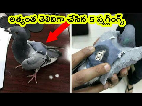 Top 5 smartest smugglers ever seen | smuggling techniques | Bmc Facts | Telugu