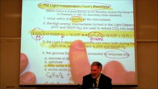 PHOTOSYNTHESIS; LIGHT&DARK REACTIONS By Professor Fink