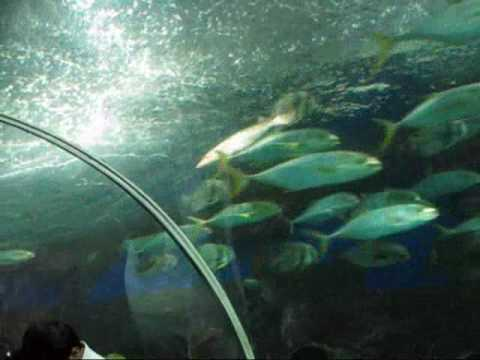 Underwater World of S..