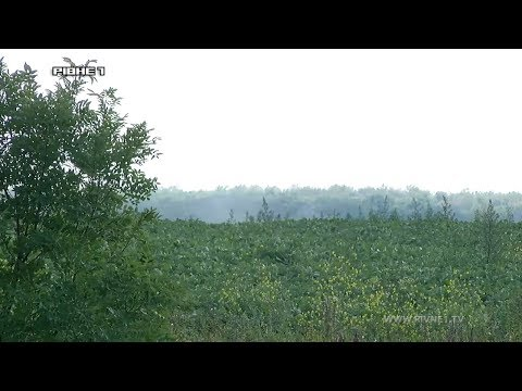 Жителі Гощанського району скаржаться на місцевий агрохолдинг [ВІДЕО]