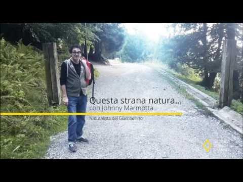 Questa strana natura con Johnny Marmotta - ep.000 : Tra i boschi di San Primo