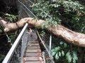 Malaysia Borneo Sarawak Regenwald Jungle Trek Mount Santubong Selamat Datang